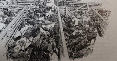 Jacques Damade, Abattoirs de Chicago: le monde humain