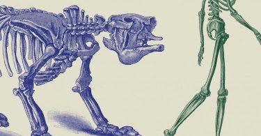 Charles Frankel, Extinctions. Du dinosaure à l'homme