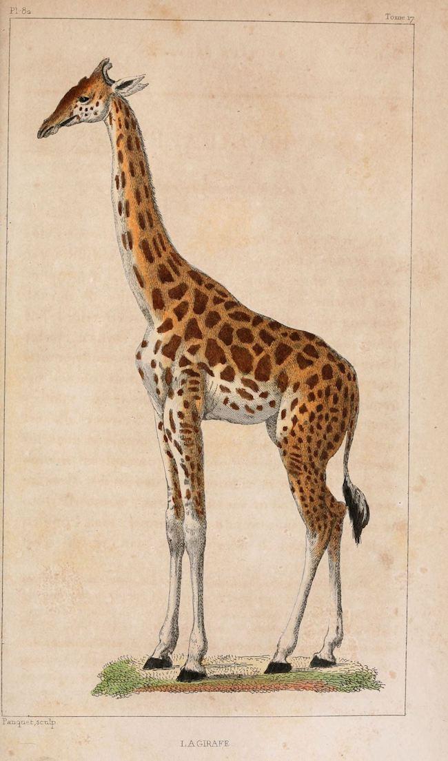 Eric Baratay, Biographies animales, Seuil & Jean-Bernard Véron, Le rhinocéros de Dürer, Actes Sud