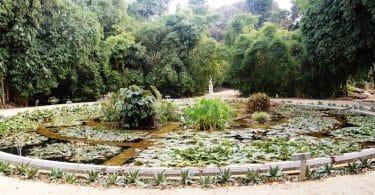 Édith de la Héronnière, La sagesse vient de l'ombre : Dans les jardins de Sicile