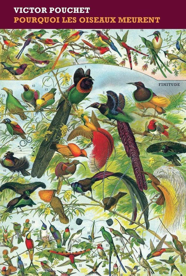Victor Pouchet, Pourquoi les oiseaux meurent