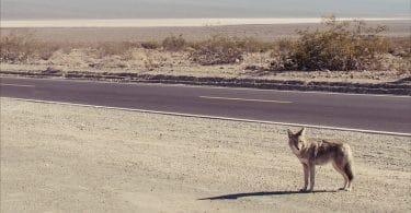 Callan Wink, Courir au clair de lune avec un chien volé