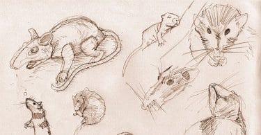 Marina Tsvetaeva, Le charmeur de rats. Satire lyrique