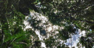 Guiomar de Grammont, Les ombres de l'Araguaia