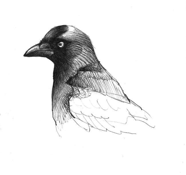 Alexis Gloaguen, Écrits de nature II. Entre Écosse et Bretagne